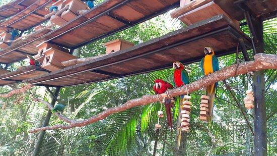 Aves na natureza junto ao parque