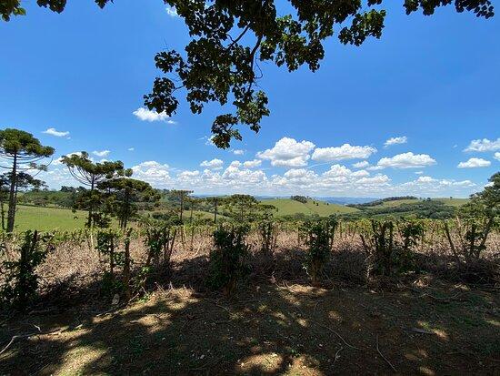 Vinhos Colinas da Mantiqueira