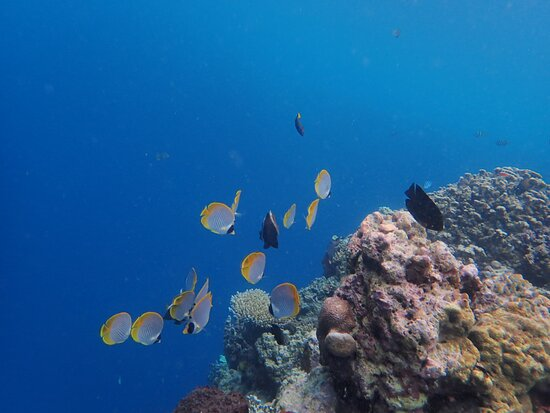 very cute fishes