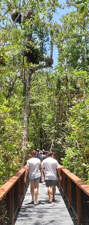 2 Day Great Barrier Reef and Daintree Rainforest, Cape Tribulation Deluxe tour: Boardwalk