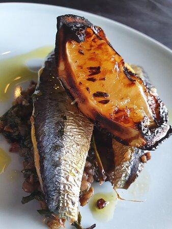 Darwin, Úc: sardines