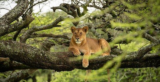 Instyle Africa Safaris