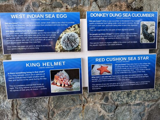 Skip the Line Coral World Ocean Park General Admission Ticket: sign