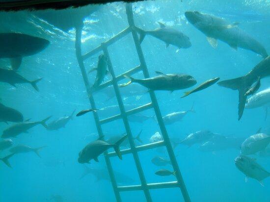 Skip the Line Coral World Ocean Park General Admission Ticket: tarpon