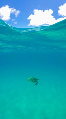 Venha mergulhar com as tartarugas no passeio de snorkel