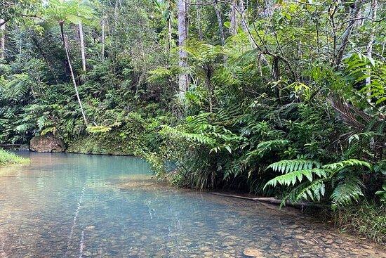 Tour privato di un'intera giornata a San Juan Foresta pluviale e