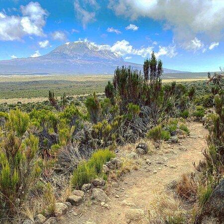 """""""Trek under rain, sun and stars for 7 Days Lemosho Route"""""""