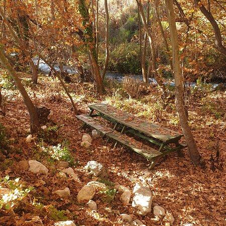 Zeyve lavanta Tatilköyü doğayla içiçe