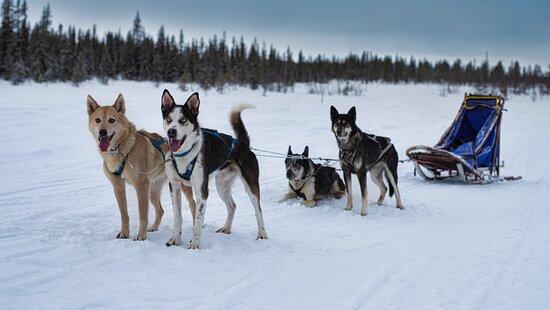 Arctic Dogsled Adventure AB