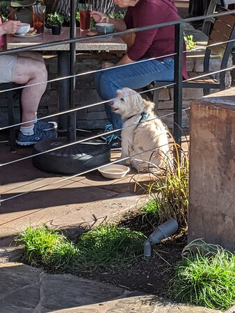 Little white dog by the entrance to The Lazy Dog.