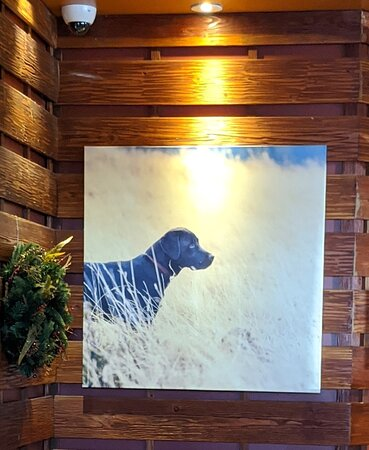 Painting of Black Labrador on the wall of the Lazy Dog Restaurant.