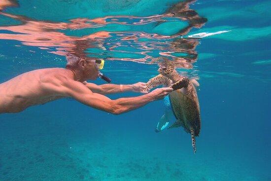 Croisière privée d'une journée complète avec plongée libre autour de...