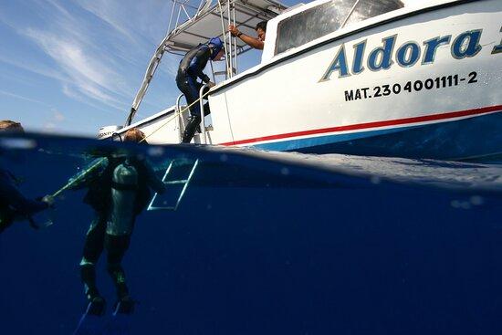 Aldora Divers