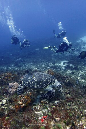 Aldora Divers - Only the best of Cozumel 027