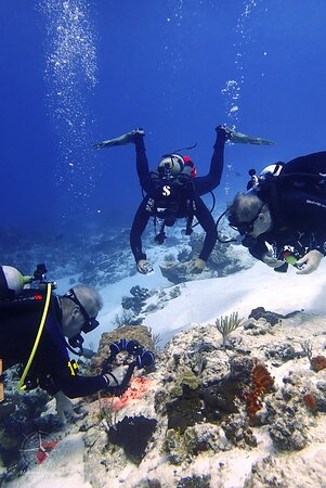 Aldora Divers - Only the best of Cozumel 028