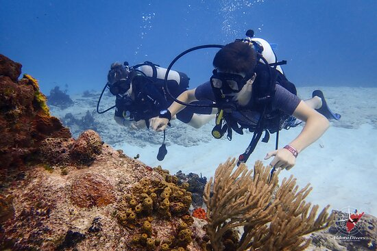 Aldora Divers - Only the best of Cozumel 030
