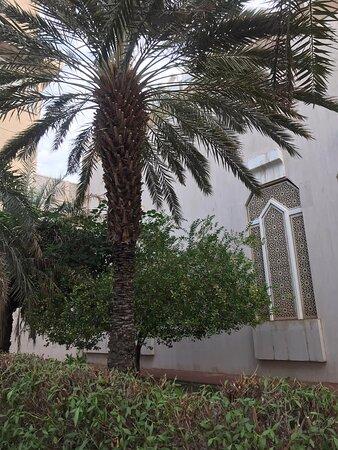 مسجد الكليب - قرطبة