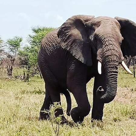 It's still on 50%discount every activity when you travel to Uganda this season.  The offer is still open December up to March 2021