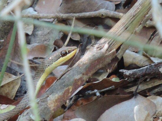 Provincia de Gaza, Mozambique: Beautiful spotted snake at BNP Fish Eagle Camp