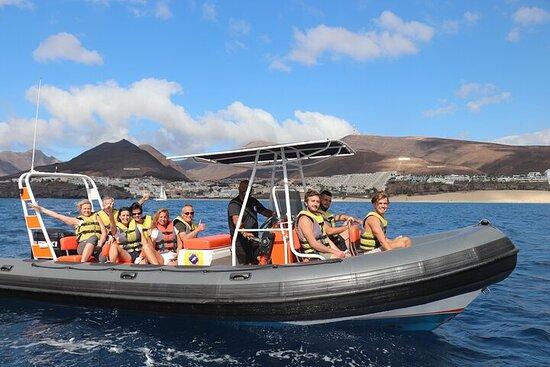 Fuerteventura: 1.5-Hour Dolphin and...