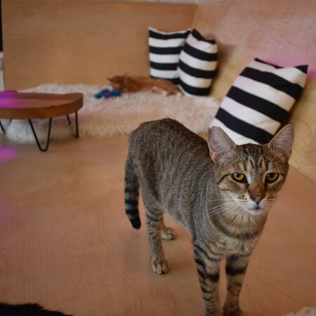 NEKO: A Cat Cafe