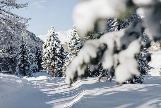 Winter Wonderland @BenjaminPfitscher