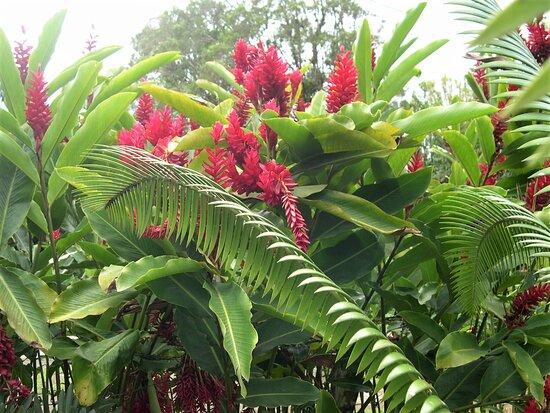 Мартиника: Souvenirs de mes Voyages --- France -- Antilles -- Martinique -- Plaisirs des yeux et des senteurs de la faune et de la flore dans le centre de cette île merveilleuse .20.12.05