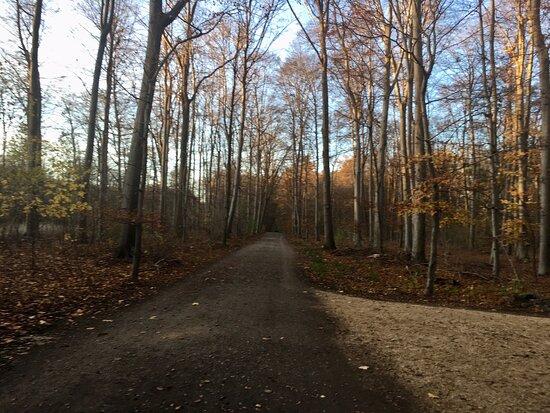 Spaziergang bei blauem Himmel und schönen, aber kaltem Wetter rund um den See.