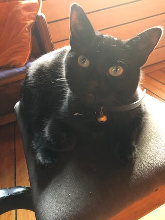 Cookie The Poorhouse Cat