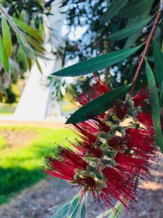 Beaufort Memorial Gardens