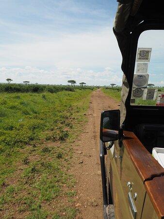 Reserva Natural Masái Mara, Kenia: auf Gamedrive