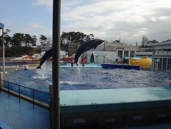 越前松島水族館 3