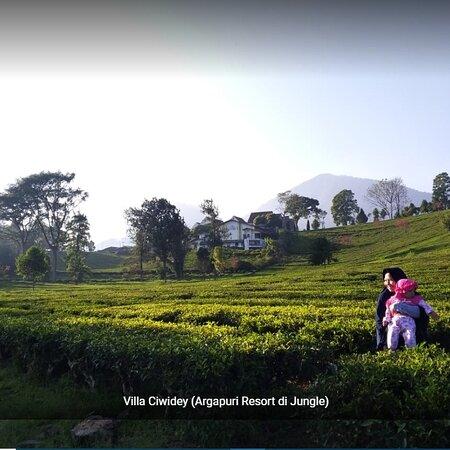 Ciwidey, Indonesia: Villa di kebun teh