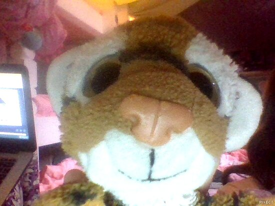 Elkhart, IN: This cute little tiger puppet that i named tigey is from John Ball Zoo. Now it is very soft! BUY THIS CUB!!!