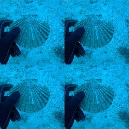 Dreaming of deep dives during lockdown! #deepdives #amforeas #40meters #poseidondivingacademy #neosmarmaras