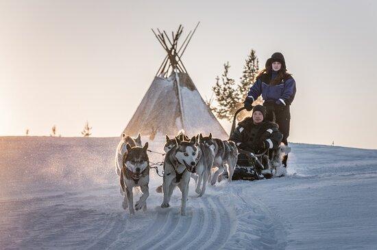 Saariselkä, Finland: Husky safari!