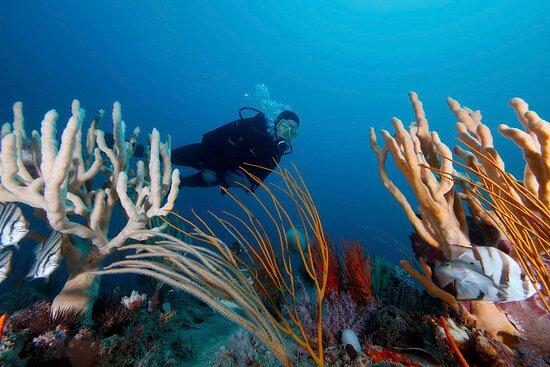 Sapelo Island, GA: Gray's Reef National Marine Sanctuary is a diver's paradise.