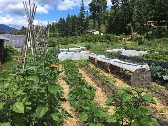 Riondel, Canadá: Garden
