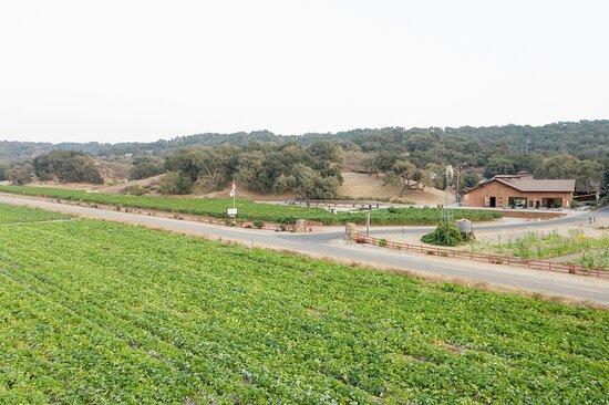 Los Olivos, CA: View of our estate.