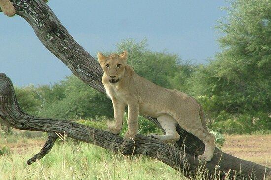 Pictures of Kruger Big 5 Safaris - Marloth Park Photos - Tripadvisor