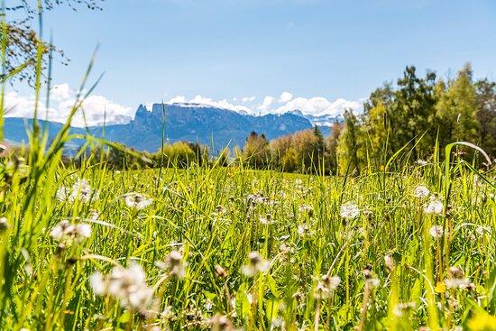 Sonnenplateau Ritten - Altopiano del Renon