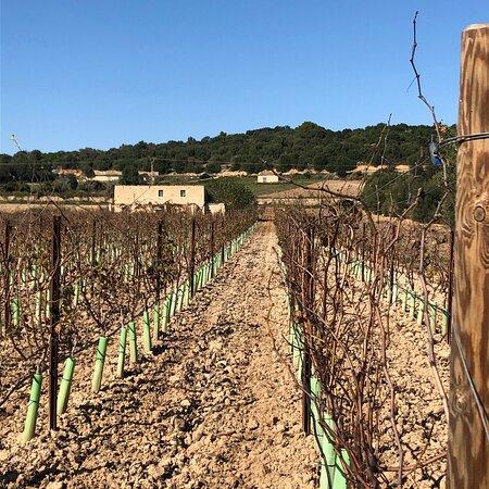 Some grapevines are available  🍇🍇🍇🍇🍇🍇🍷🙋♀️🙋♂️ Your wine 🍷 | Your piece of Mallorca 🏝 g r a p e v i n e  s p o n s o r s h i p DE.WeinFeldSineu.com EN.WeinFeldSineu.com weinfeld.sineu@gmail.com P҉R҉E҉-O҉R҉D҉E҉R҉ & P҉A҉Y҉ L҉A҉T҉E҉R҉ DE.WeinFeldSineu.com/pre-order EN.WeinFeldSineu.com/pre-order You could find us on INSTAGRAM: instagram.com/Weinfeld.Sineu ☀️ #weinfeldsineu #mallorca #redwine #whitewine #wine #rebenpatenschaft #weinemallorca #rotwein #weißwein #weinstock #ökologisch #sineu #weinberg