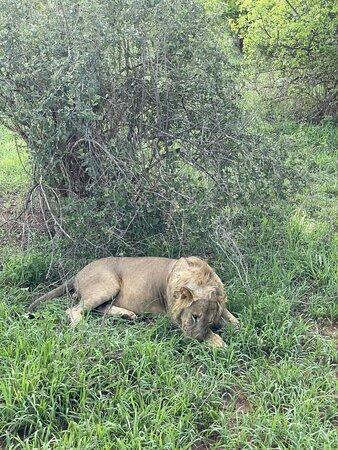 Tarangire National Park, Tanzania: Лев