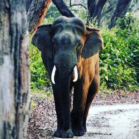 During Corbett jungle safari