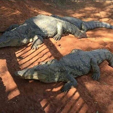 Saint-Louis, Senegal: Venez visiter le réserve de Bandia avec abdoulaye guide tour