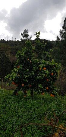 Calabria, Italia: A Natale non c'è tavola calabrese che si rispetti senza la colorata presenza di arance e mandarini che, con il loro profumo, da soli, contribuiscono a creare subito l'atmosfera tipica della festa :)
