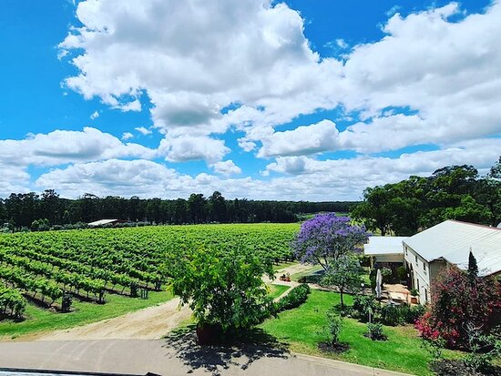 Pokolbin, Australie : Tintilla Estate Wines, vineyard view