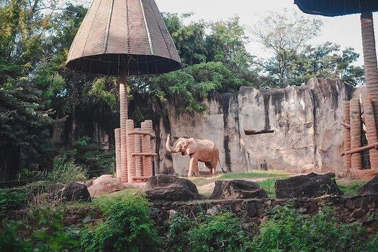 วิวบ้างเผื่อเบื่อคนนนน😂 ช้างแอฟฟริกาค่ะตัวนี้ที่ไทยมีที่นี่ที่เดียวเลย เห็นเค้าว่ายังงั้นนะคะ