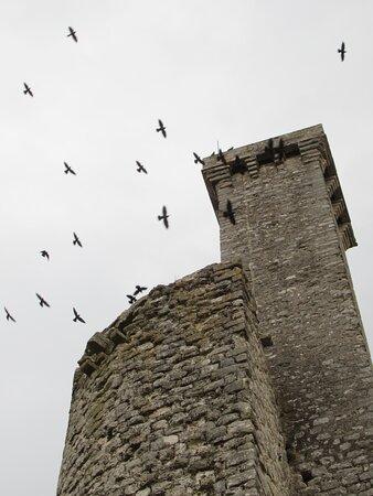 Castelnau-de-Levis, França: tour nord et tourelle de guet survolées par des corbeaux