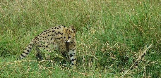 https://www.tripadvisor.com/Attraction_Review-d4154041?m=19905 #tanzaniasafari #carrental #africansafari #tanzaniacarrental #tanzaniasafaris